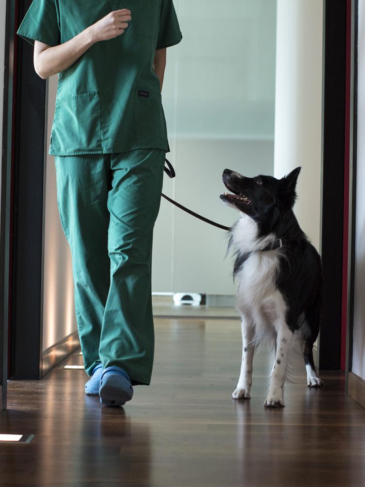 veterinario-seregno